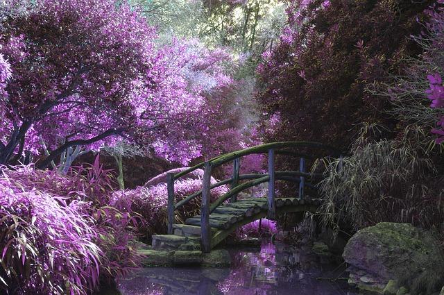 Zakładanie ogrodów – dbałość o przestrzeń i rośliny