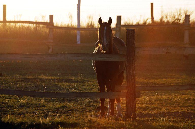 W hali namiotowej można trzymać konie